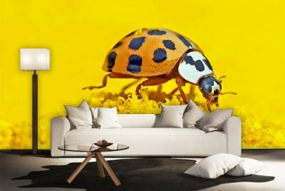 c-_users_boki_desktop_gradovi_amazing-paint-home-interior-wonderful-decoration-ideas-amazing-simple-at-paint-home-interior-hccome-interior-ideas