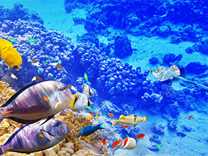 tapete vodeni svet, foto tapete podvodni svet